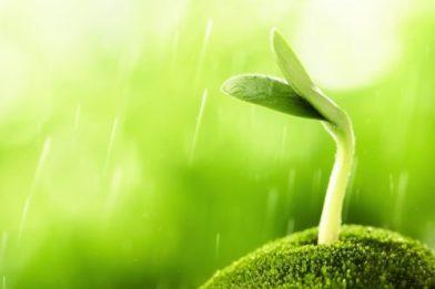 nutrient dense vegetables