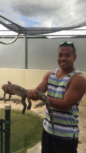 Black River crocodile Jamaica