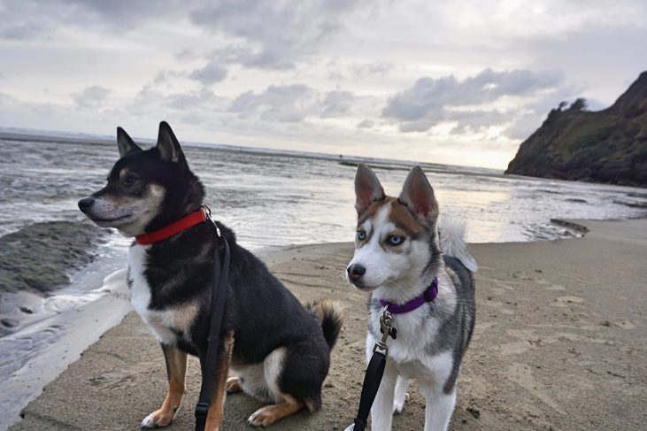 dogs at the oregon coast