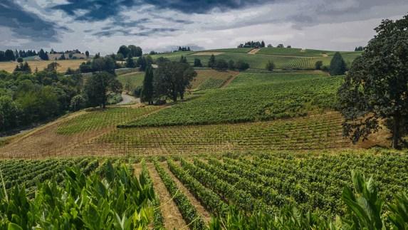 wineries to visit in the willamette valley De Ponte Cellars