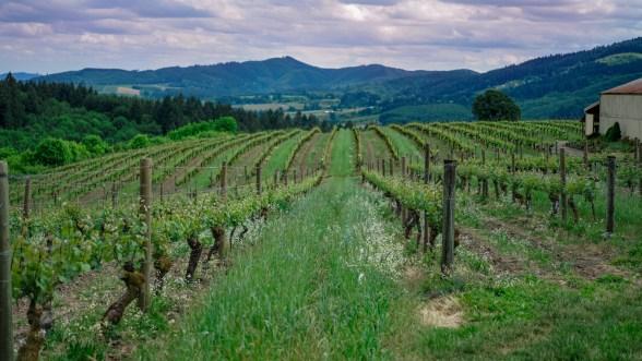 best wineries in oregon tualatin valley fittwotravel.com