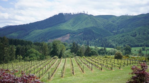 risdall ranch wineries tualatin valley wineries fittwotravel.com