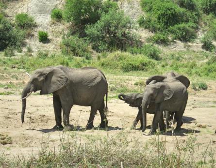 Life-Of-Doing-Tanzania-Tarangire-National-Park