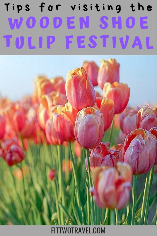 Tips for visiting Oregon's Tulip Festival, the Wooden Shoe Tulip Festival has over 40 acres of tulips, including fun activities for kids, dog friendly, and plenty of food and drinks to buy #tulipfestival #oregon