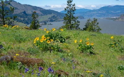 23 of The Best Columbia Gorge Hikes