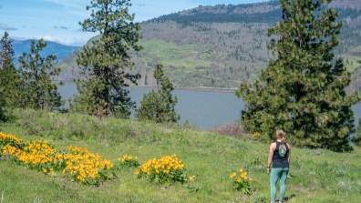 mosier plateau trail columbia gorge hikes