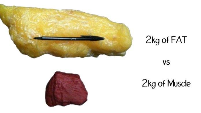 肌肉不等於脂肪_03
