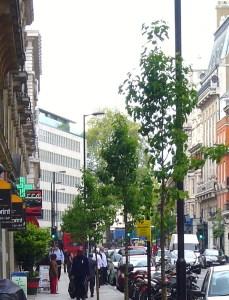 New trees along Great Portland Street.