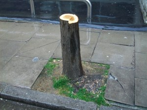 Tree stump.