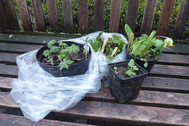 Pots of plants.