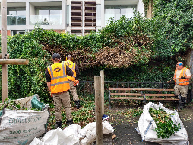 Workers cutting hedges.