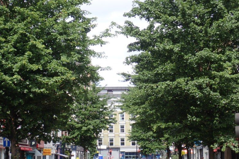 Field maple trees on Goodge Street in May 2020.