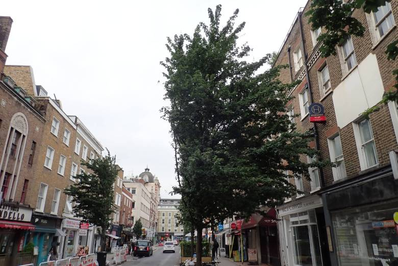 Two field maple trees cut almost in half in Goodge Street.