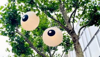 Inflatable eyes in tree.