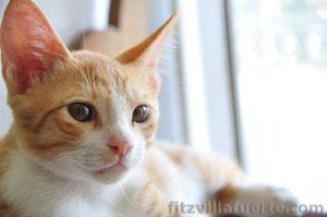 icus-cat-1