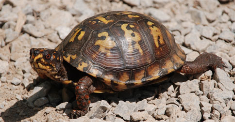 turtle-traders