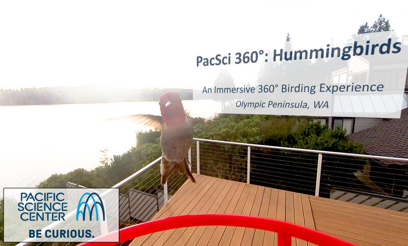 PacSci 360°: Hummingbirds