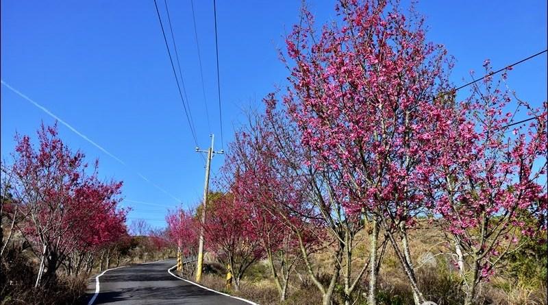 九份二山櫻花步道
