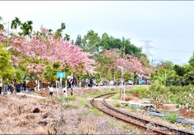 二水車站花旗木