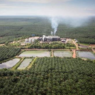 Oil Palm Plantation and Mill in Southern Papua