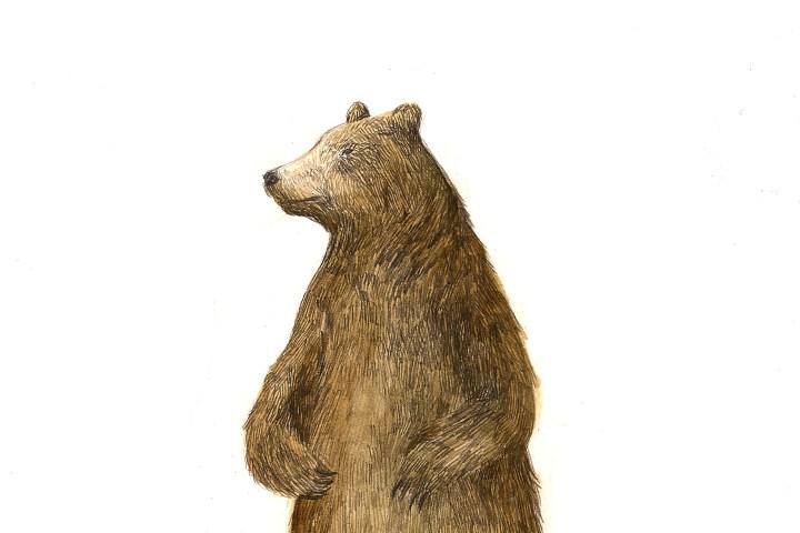 bear for here - Stewart