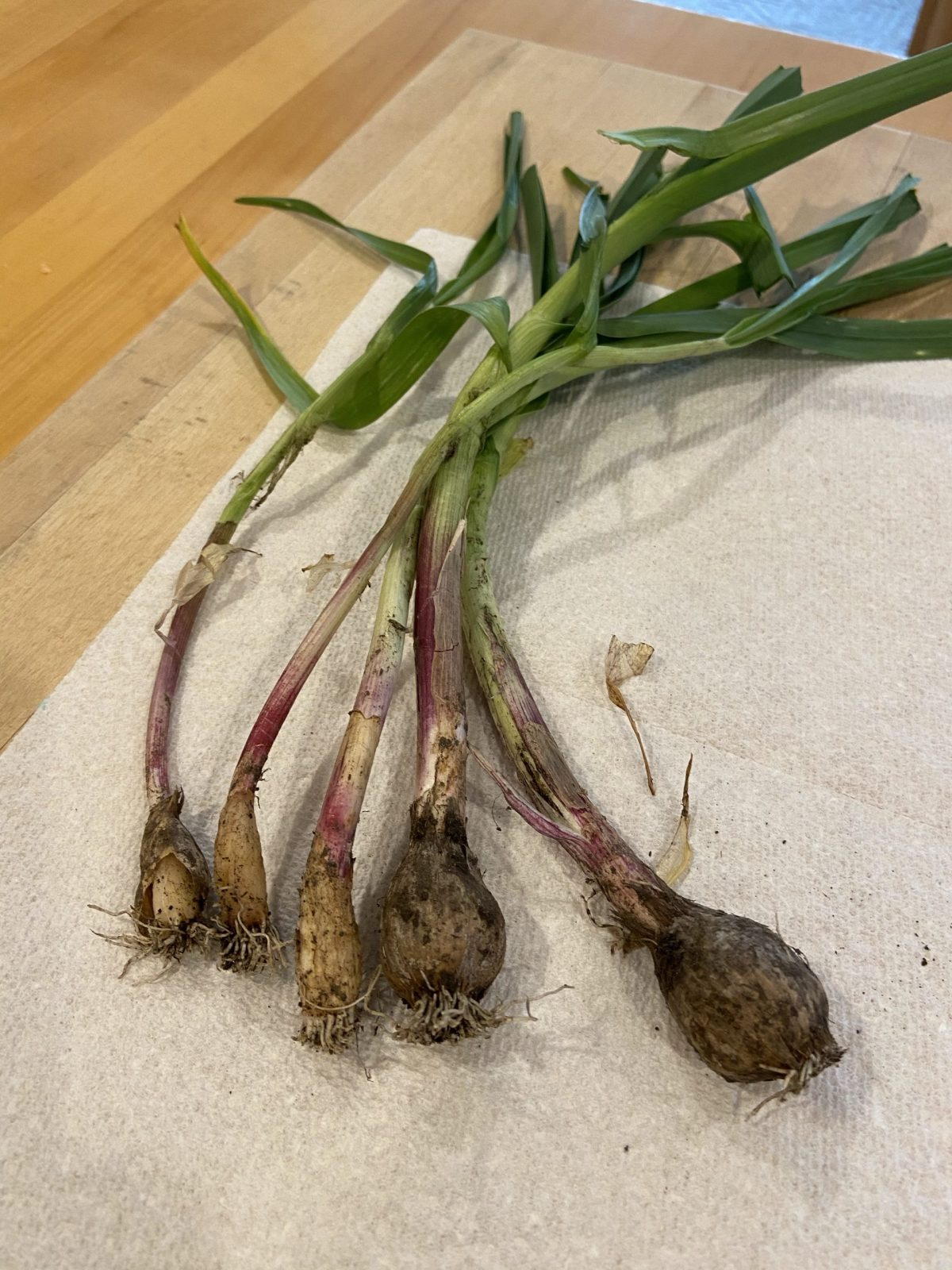 Spring Garlic—What Is It And How To Use It