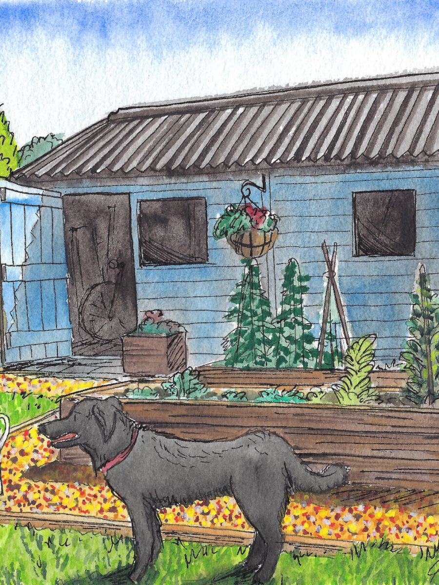 Painting of garden shed, raised beds, and a dog.