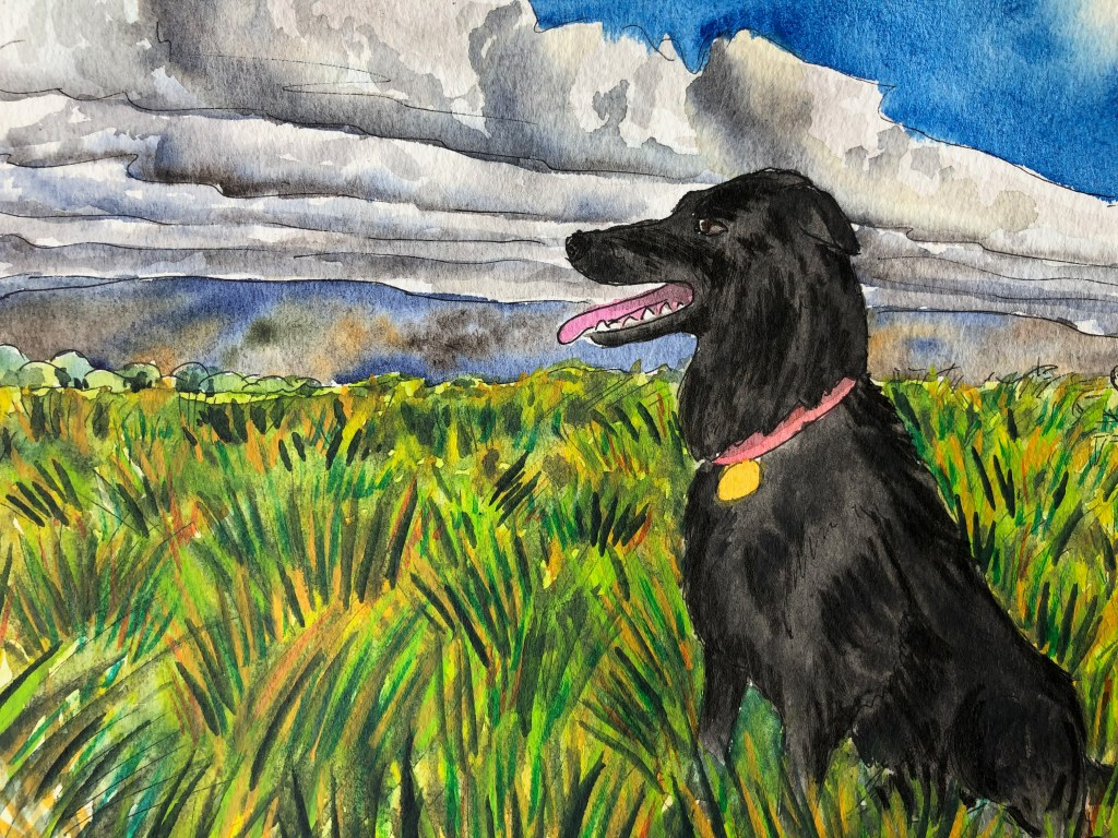 Close up of watercolor painting of grass field and dog.