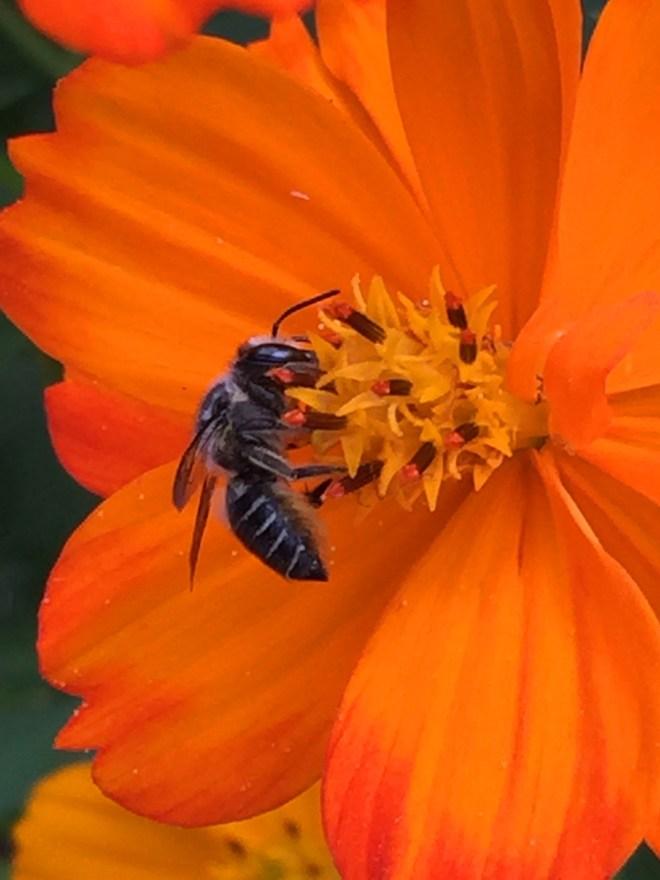 IMG_2848_PollinatorsAndVisitors_2015_08_23_sm