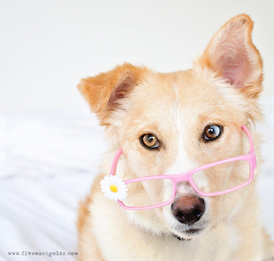 5 Pet Photography Tips for Photographing Dogs | Five Marigolds #ad #FeedDogsPurina @Target