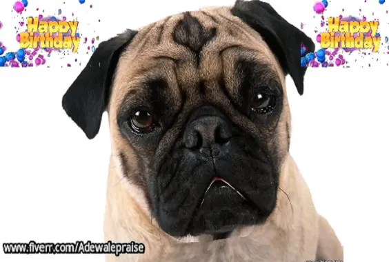 Make Your Pet To Sing A Happy Birthday Song By Adewalepraise Fiverr