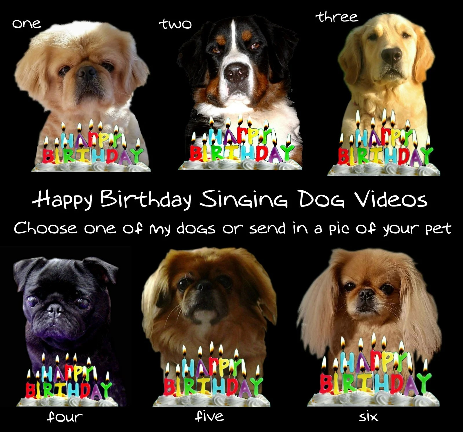 Make A Happy Birthday Dog Or Cat Singing Video By Gooberella Fiverr