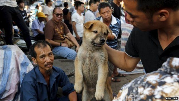 The countries where people still eat cats and dogs for dinner