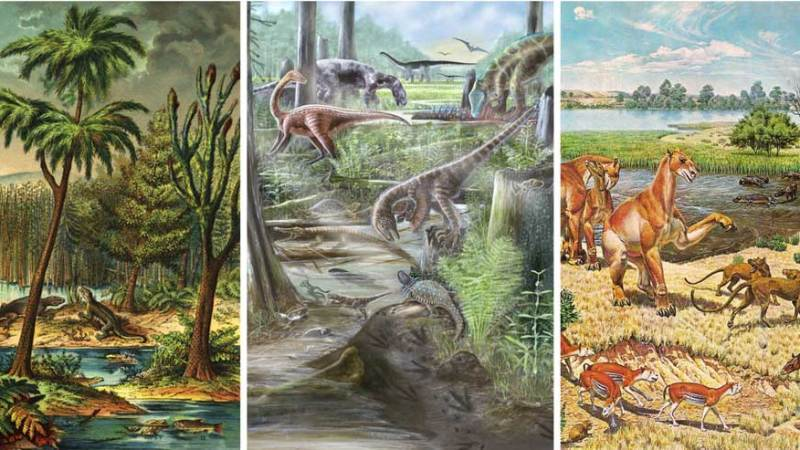 Land animal diversity was stable for millions of years, before humans came along – new study