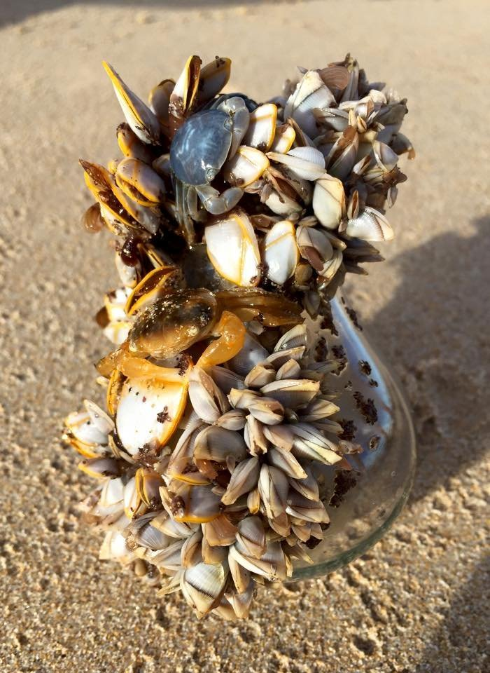 My Brother Found This Life-Bulb Washed Up On An Australian Beach. It Was All Alive And It Floated