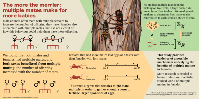 Infographic: Why do female insects mate with multiple males?