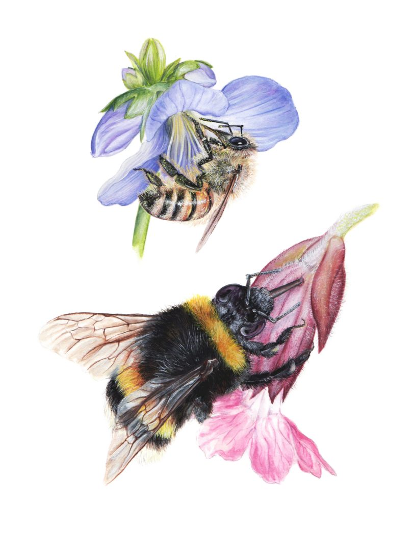 The Robber and the Pollinator by Daisy Chung