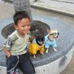 Pattaya-dogs-beach-Thailand