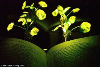 Streetlights could be replaced by luminescent trees