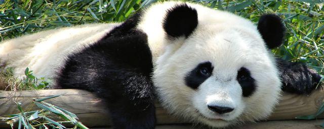 panda, unruly, startups