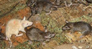 rat race, success, wealth