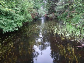 Bearskin Creek