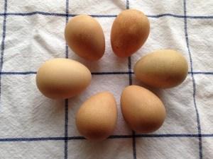 guinea_hen_eggs