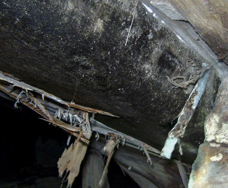 5 Warning Signs of Crawl Space Damage and How to Fix Them