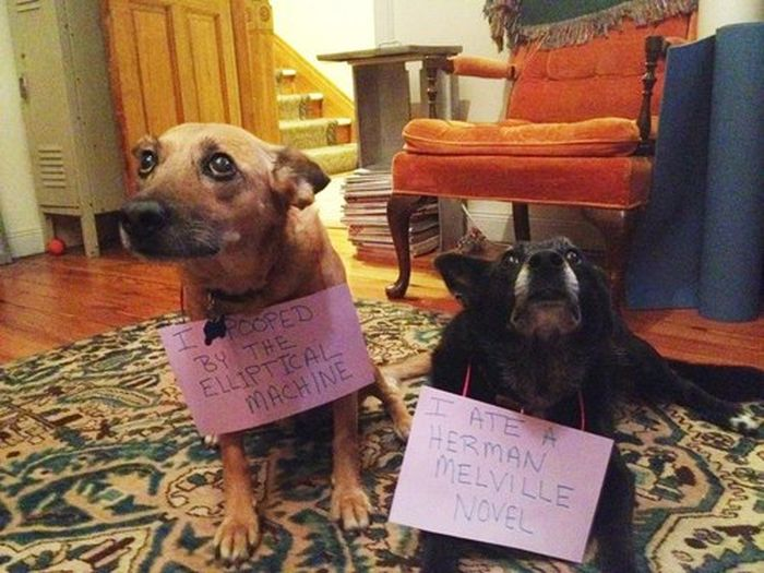 Bad Dogs With Signs Detailing Their Crimes
