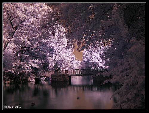 Amazing Infrared Photography (6)