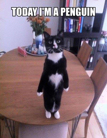 Hilarious Animals (4)