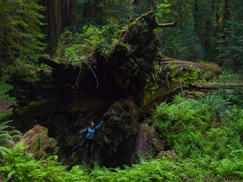 Mammoth Of a Fallen Tree