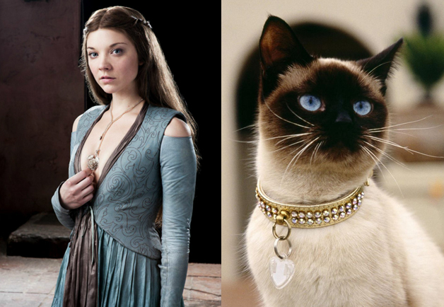 Game Of Thrones Vs. Cats
