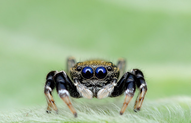 Lil' Spiders Staring Directly At The Camera